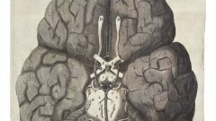 3_view_brain_below
